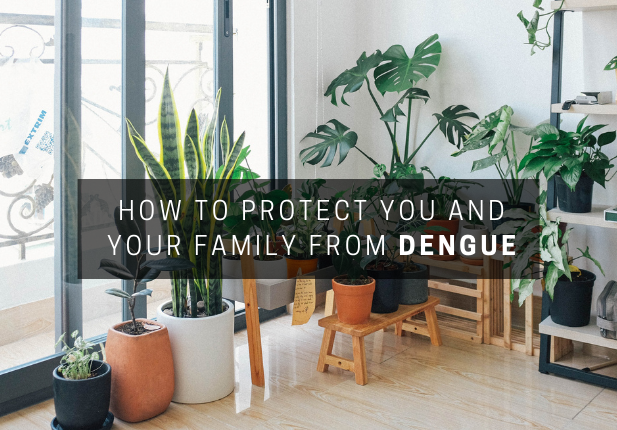 How to Protect You And Your Family From Dengue